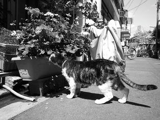 090612-musashi.jpg