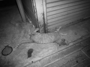 0908021-cat.jpg