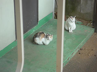 091229-cat.jpg