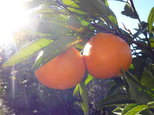 101224-orange.jpg