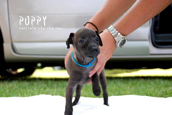 puppy-1.jpg