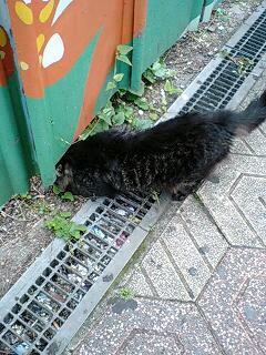 黒ネコを発見