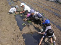 20100612satsuma.jpg