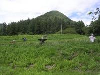 2010kakashi.jpg