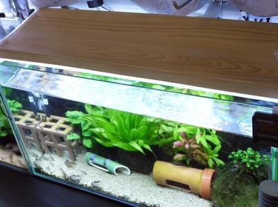 ウィステリアの香り 45cm水槽2本 × 自作LEDライト