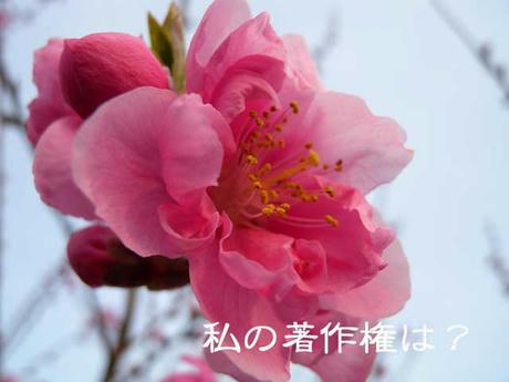 DSCN0513.jpg