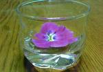 パンジー(水中花?)2