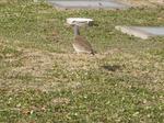 岐阜大学 野鳥