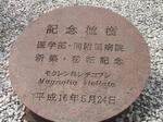岐阜大学医学部記念植樹シデコブシ