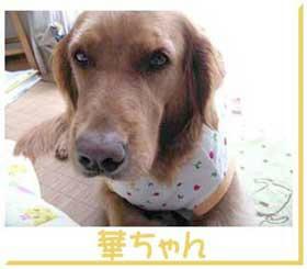 hanachan-17.jpg