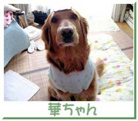 hanachan2-18.jpg