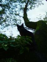 狭山湖の黒猫