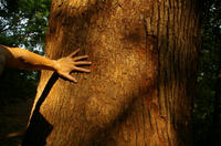 多峰主山の木
