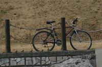 自転車とスズメ