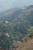 高尾山にて桜