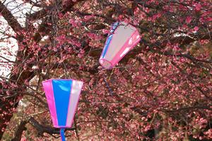 吉野梅郷の梅祭り