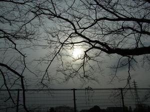 太陽が霞んでます