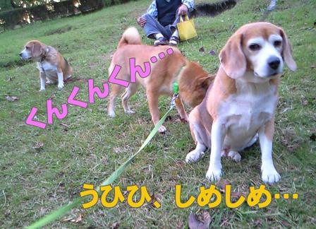 NEC_0145-web.jpg