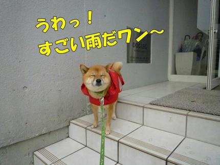 web-P1090086.jpg