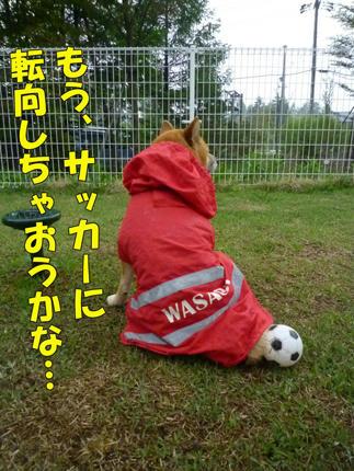 web-P1090097.jpg