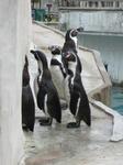 ペンギンいぱーい
