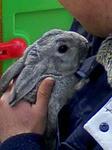 飼育員&ウサギ