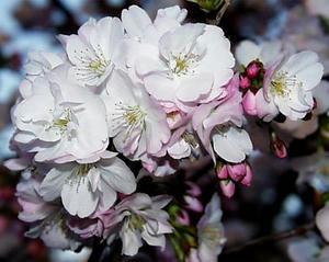 桜 植物園へようこそ!