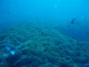 diving03.jpg