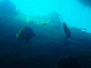 diving08.jpg