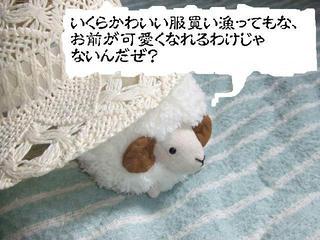 ひつじ様5/16