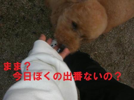 2c57979e.JPG
