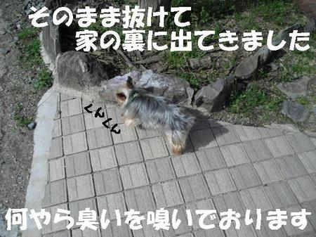 CIMG0443.JPG
