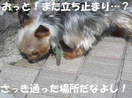CIMG0449.JPG