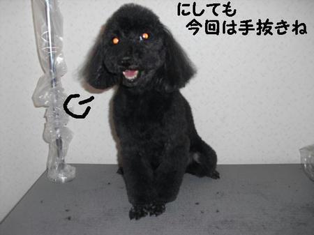 CIMG9105.JPG
