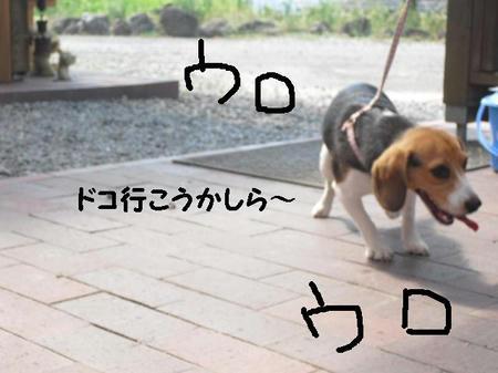 CIMG0969.JPG
