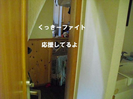 fa83a004.jpg