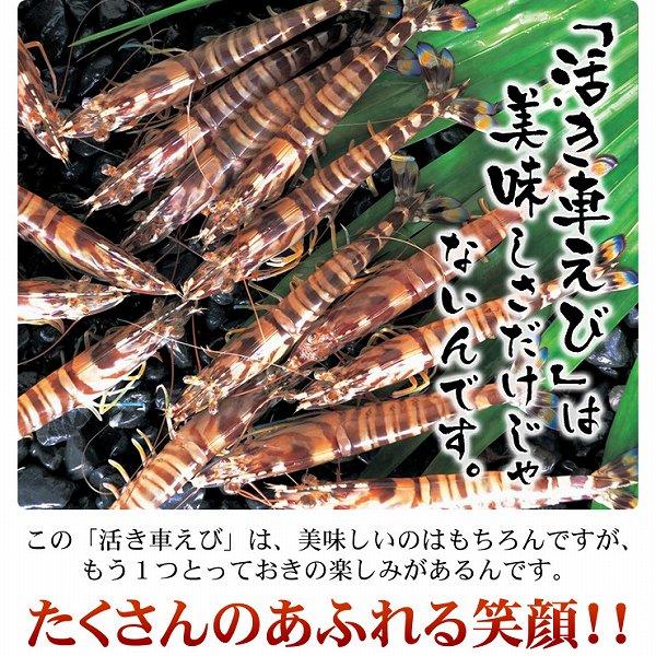 贈り物には久米島産活車エビがおすすめ!