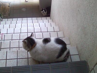 ヤンチャ&白黒猫