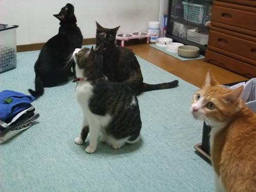 ロッくん&ココ&ちゃちゃ&ぴぴ
