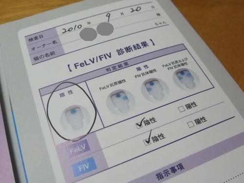FeLV/FIV検査結果