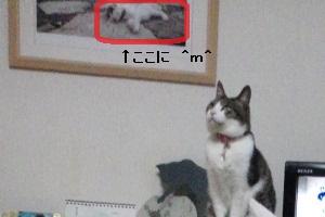 ちゃちゃ & 猫写真