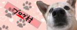 にほんブログ村 犬ブログ へ