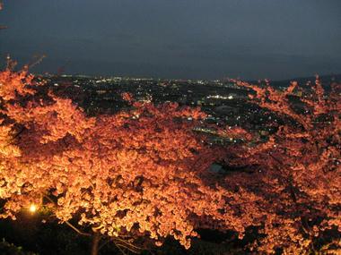 河津桜と夜空