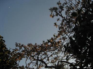 月としだれ桜