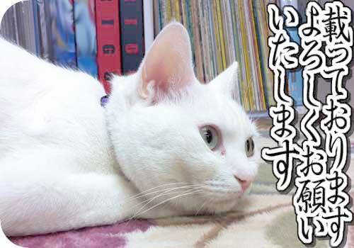 雑誌掲載させて頂いております~【お願い猫】