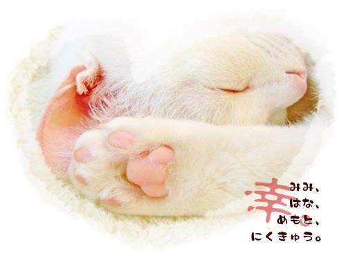 猫マニアの人向け。