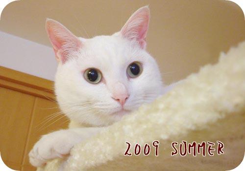 2009 夏 ねこ