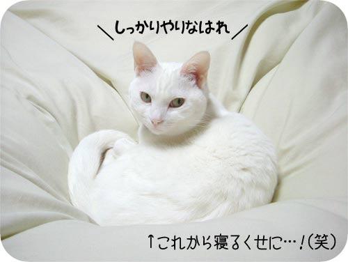 猫も応援(多分)
