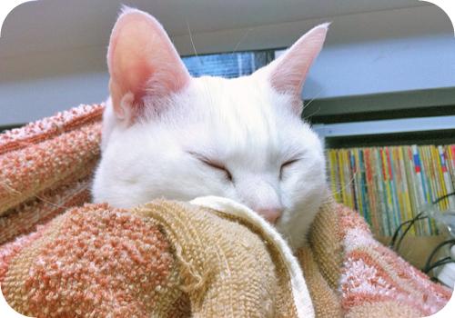 ひとやすみ猫