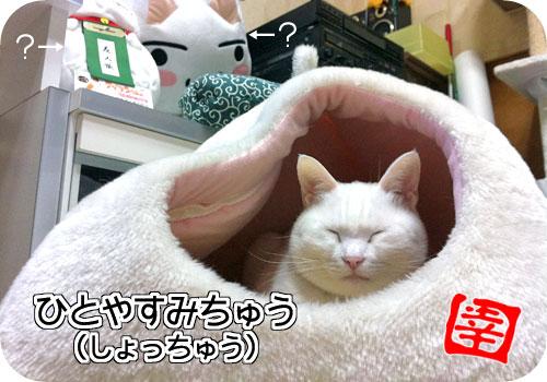 鼻のまわりが猫っぽい写真